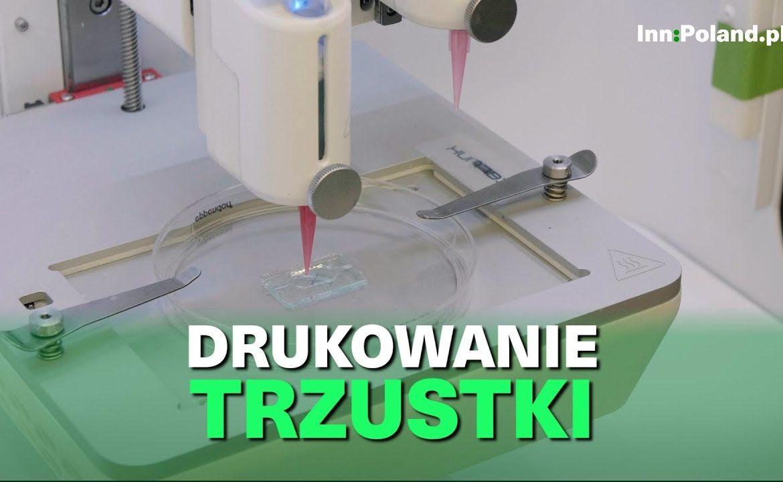bioniczna trzustka, cukrzyca typu I, badania przedkliniczne, polscy naukowcy